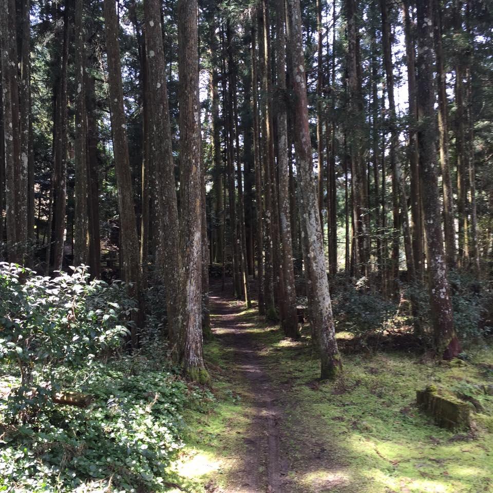 ルチャ・リブロへ続く木立